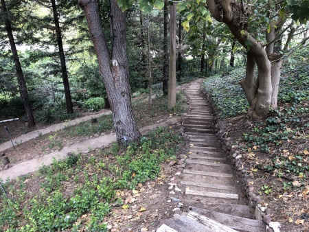 Garden Entry Steps