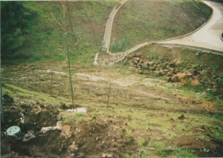 Lower Gully Before Planting