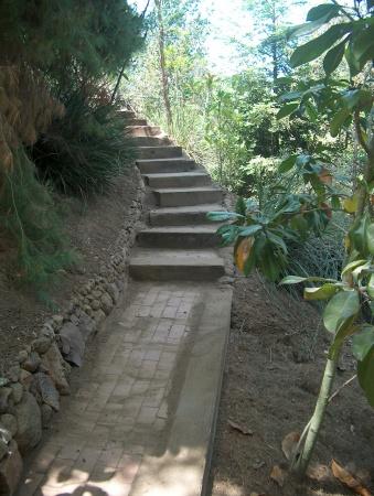 Neisner Steps 3