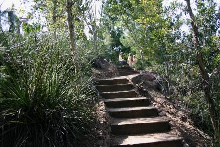 Neisner Steps 4
