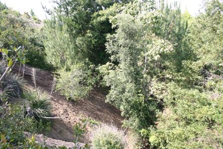 View Down Canyon